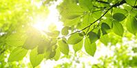 environmental_preview