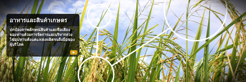 Homepage Banner - Rice and Agri - Thailand
